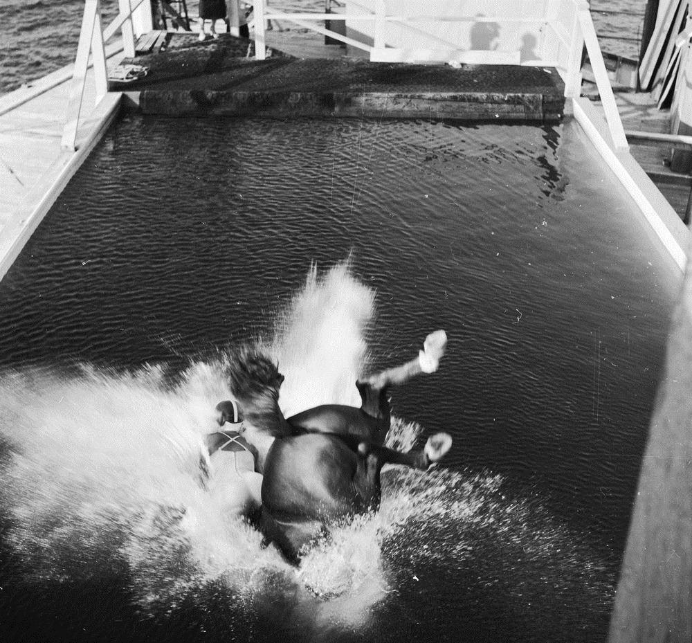 diving-horses-16