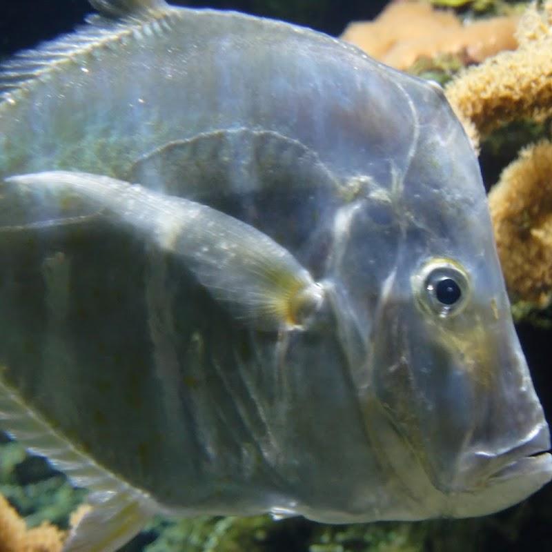 Aquarium_22.jpg
