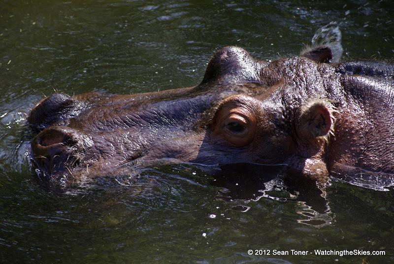 04-07-12 Homosassa Springs State Park - IMGP4535.JPG