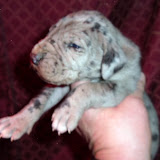 Goliath Rotella @ 2 weeks