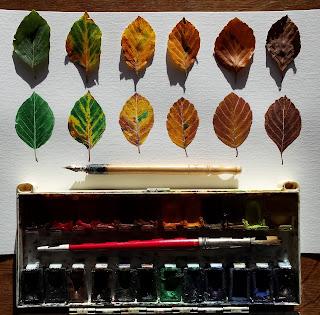 www.AliceDrawsTheLine.co.uk :: Beech leaves