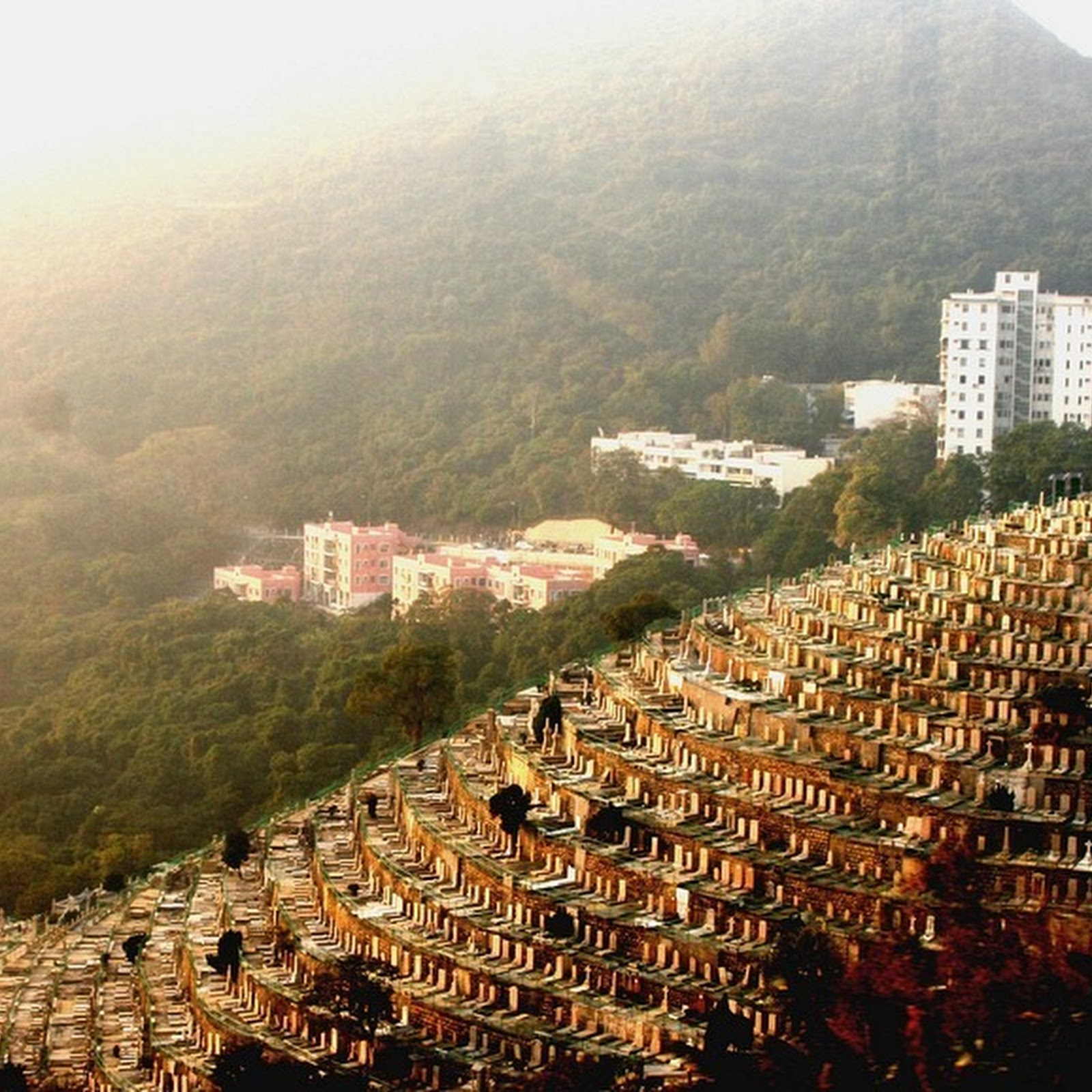The Rise of Vertical Cemeteries