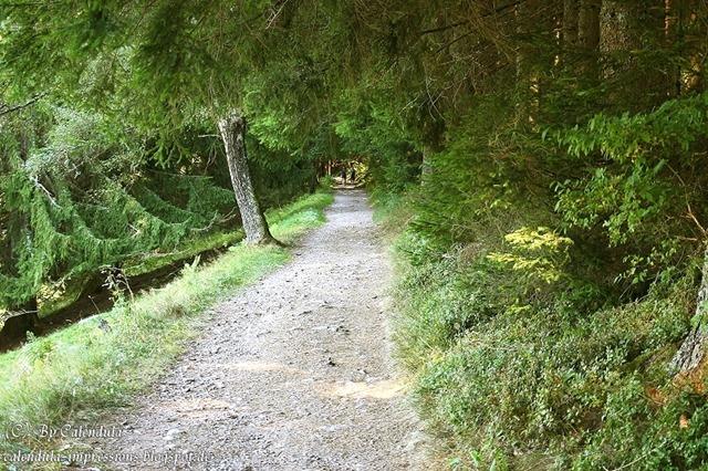 Bärental: Wanderweg nach Titisee