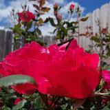 Gardening 2013 - 115_5708.JPG