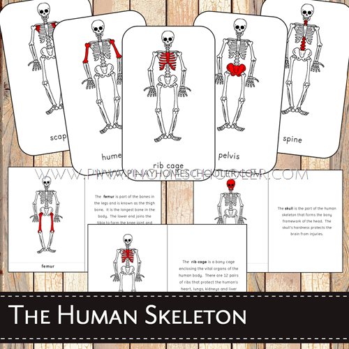 Human Skeletal System Nomenclature and Definition Booklet