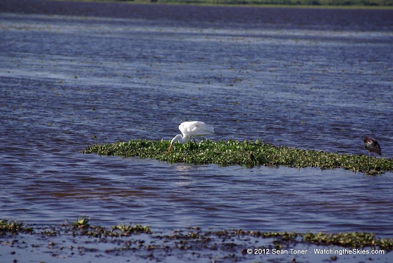 04-06-12 Myaka River State Park - IMGP4460.JPG