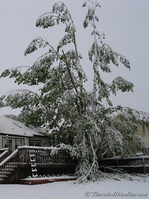 May 10, 2003 - Heavy, wet snow weighed down trees, damaging many.  Click for a larger view. (ThorntonWeather.com)