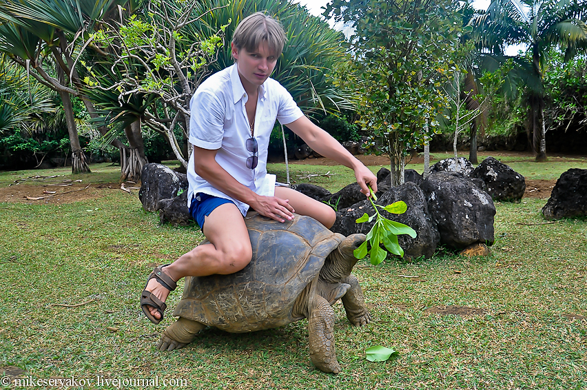 Черепаха Альдабра