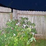 Gardening 2014 - 116_3602.JPG