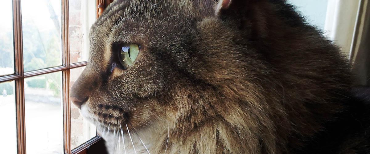 Приложение на основе ИИ подскажет в каком настроении ваша кошка