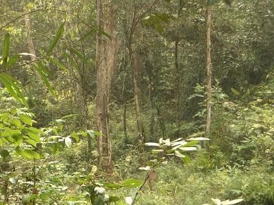 トラ騒動のあったあたりの茂み