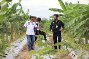 Mentan SYL Dorong Petani Millenial Tingkatkan Produksi Porang Dukung Perekonomian Nasional