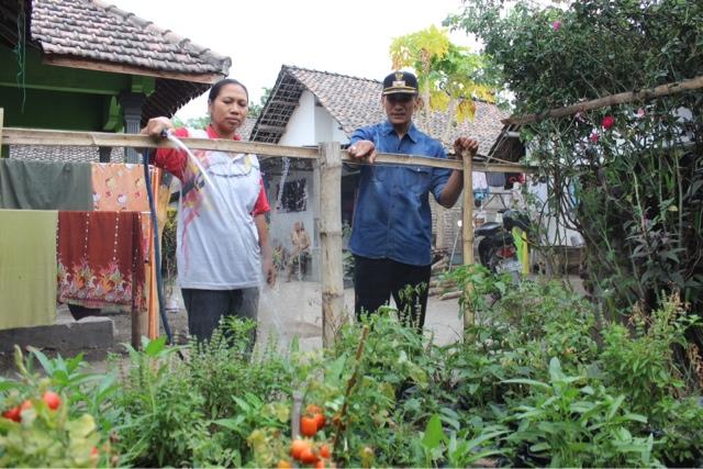 Antisipasi Puting Beliung, Pemkab Jombang Tebangi Pohon Tua,