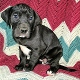Available black girl @ 6 weeks