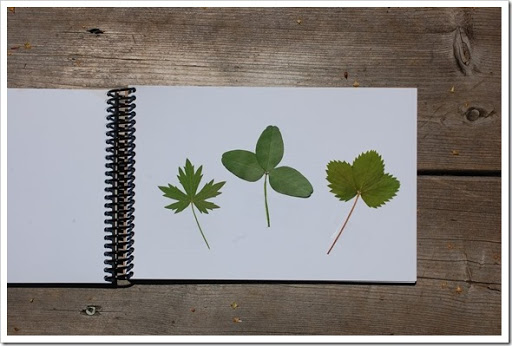 leaf book (3)