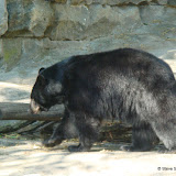 Pittsburgh Zoo Revisited - DSC05198.JPG