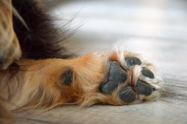 cam underfoot (3)