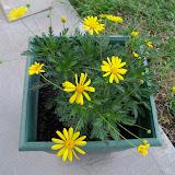 Gardening 2010 - 101_1025.JPG