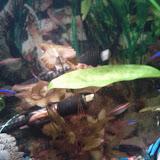 Fish - IMG_20120930_212028.jpg