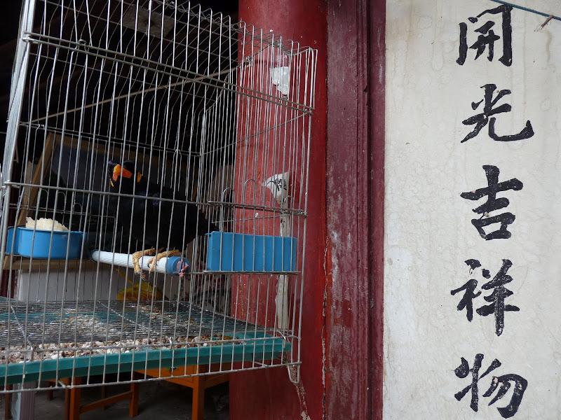 Chine .Yunnan . Lac au sud de Kunming ,Jinghong xishangbanna,+ grand jardin botanique, de Chine +j - Picture1%2B110.jpg