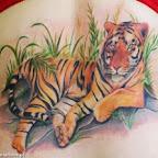 lindo tigre.jpg