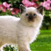 _ Kitten _
