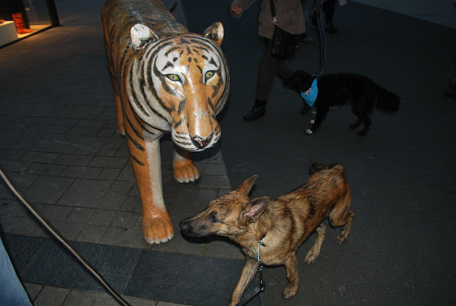 KNON-honden in Emmen - DSC_0822.JPG
