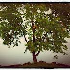 20120918-01-tree-vattern.jpg