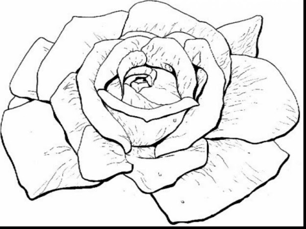 beautiful rose coloring pages drawing