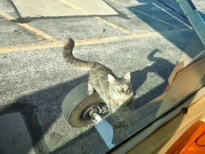 Photo: Friendliest kitty ever at Spearfish airport