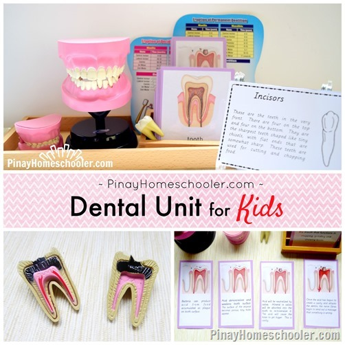 montessori dental unit