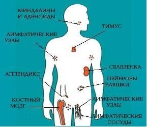 Прививка – «просто укольчик», или потеря иммунитета? 1