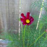 Gardening 2010, Part Two - 101_2619.JPG