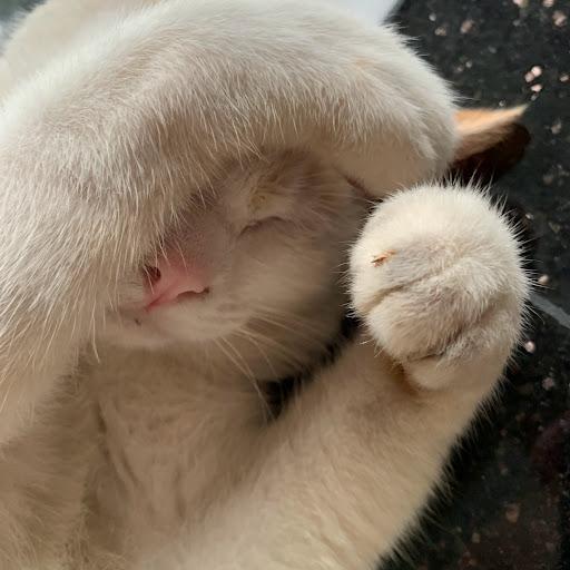 Hidayat Hasan Photo 5