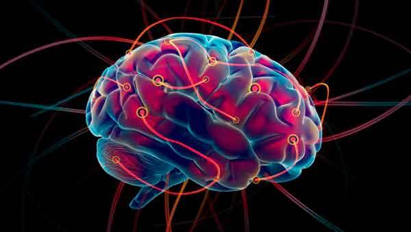 Cerebro humano imagen
