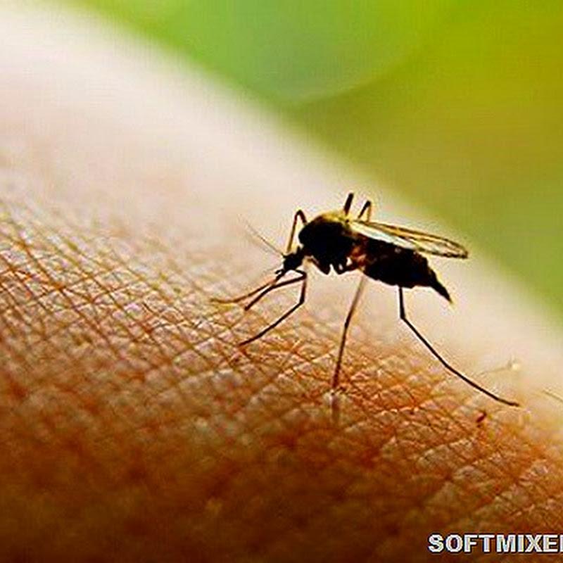 Кого любят комары