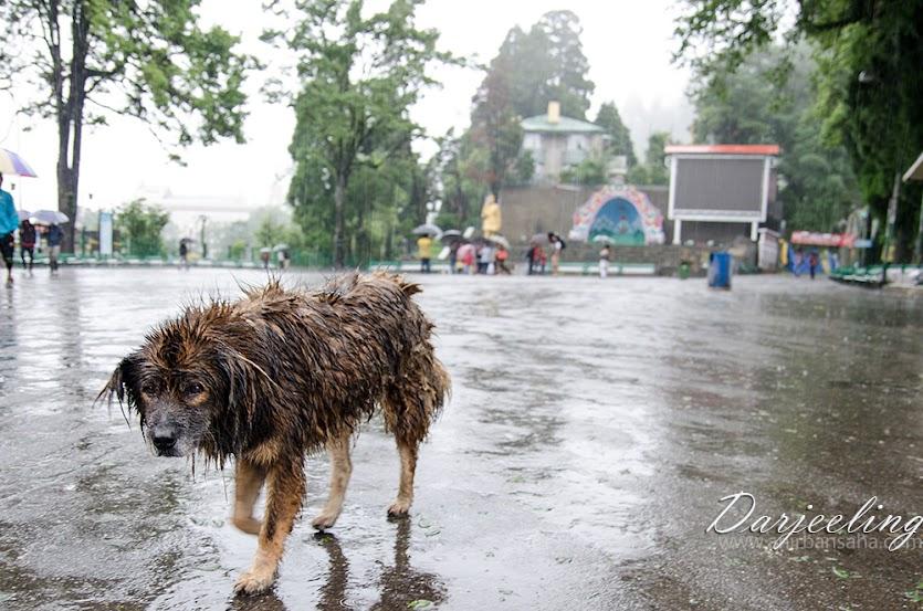 Darjeeling, Monsoon