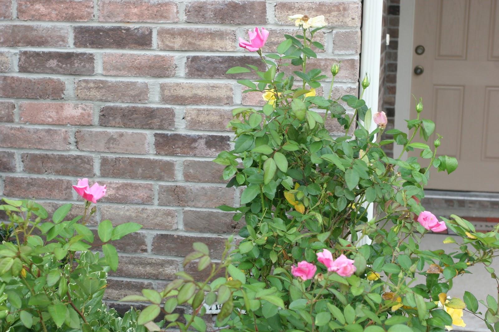 Gardening 2012 - IMG_3349.JPG
