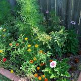 Gardening 2010, Part Two - 101_3022.JPG