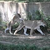 2011-06-03 National Zoo