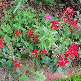 Gardening 2014 - 116_3415.JPG
