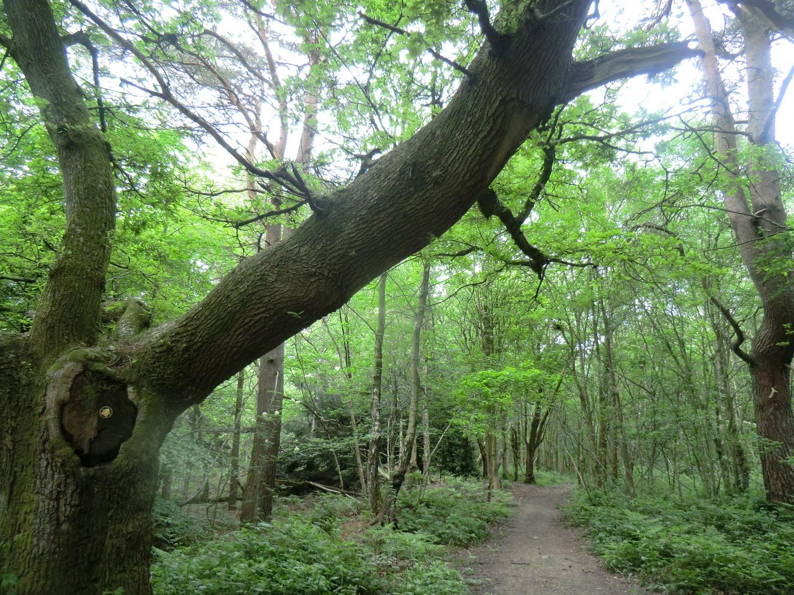 CIMG4416 Crockhamhill Common