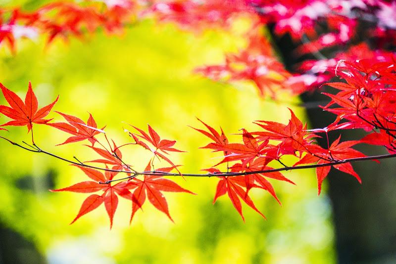 京都 南禅寺 紅葉 写真5