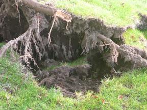 台風18号の影響でシッコゴ公園の木倒れる UP