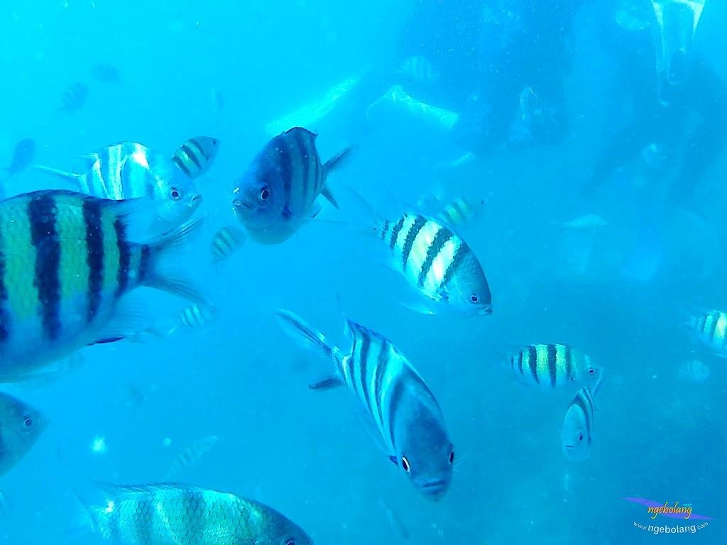 pulau harapan, 29-30 agustus 2015 SJCam 06