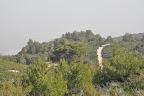עץ האורן הגבוה באמצע הוא אחד השרידים לשריפה של 2005- לפני כן הנוף היה בגובה שלו