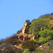 laguna_coast_wilderness_IMG_2264.jpg