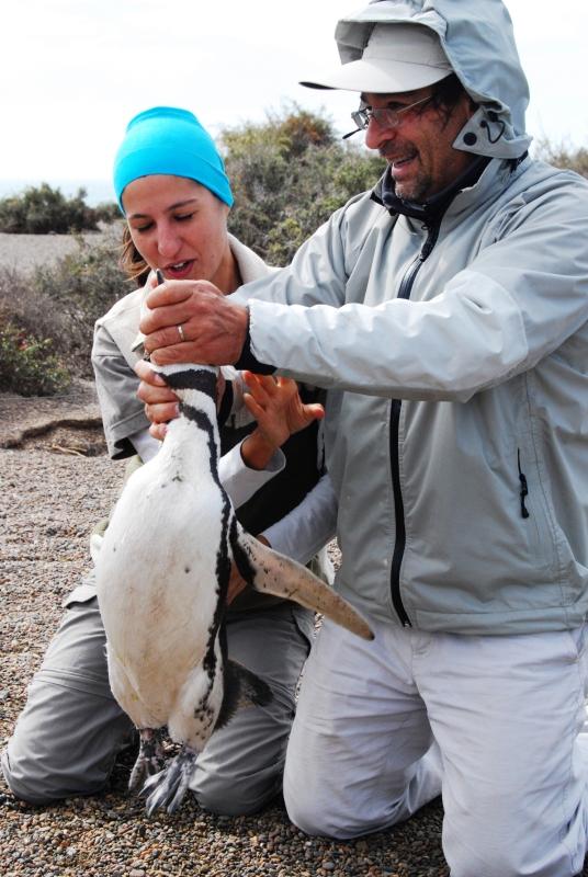 Biologistes_et_pingouins_8