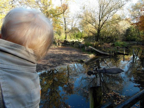Eon ziet een Nijlpaard in het water