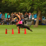 dhv Deutsche Meisterschaft 2015 - DSC_1355.JPG